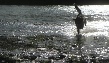 Isarhunderunde 1: Isartal bei Icking