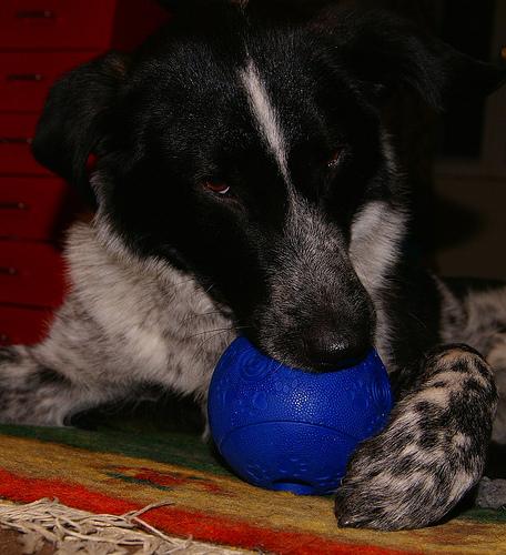 Ob Ball oder Kuscheltier - was macht euren Hund zuhause glücklich?