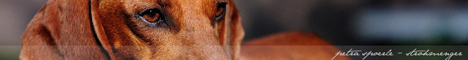 Petra Spoerle-Strohmenger Hundefotografie