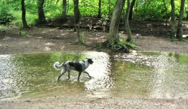 Isarhunderunde 9: Pasinger Stadtpark und Paul-Diehl-Park
