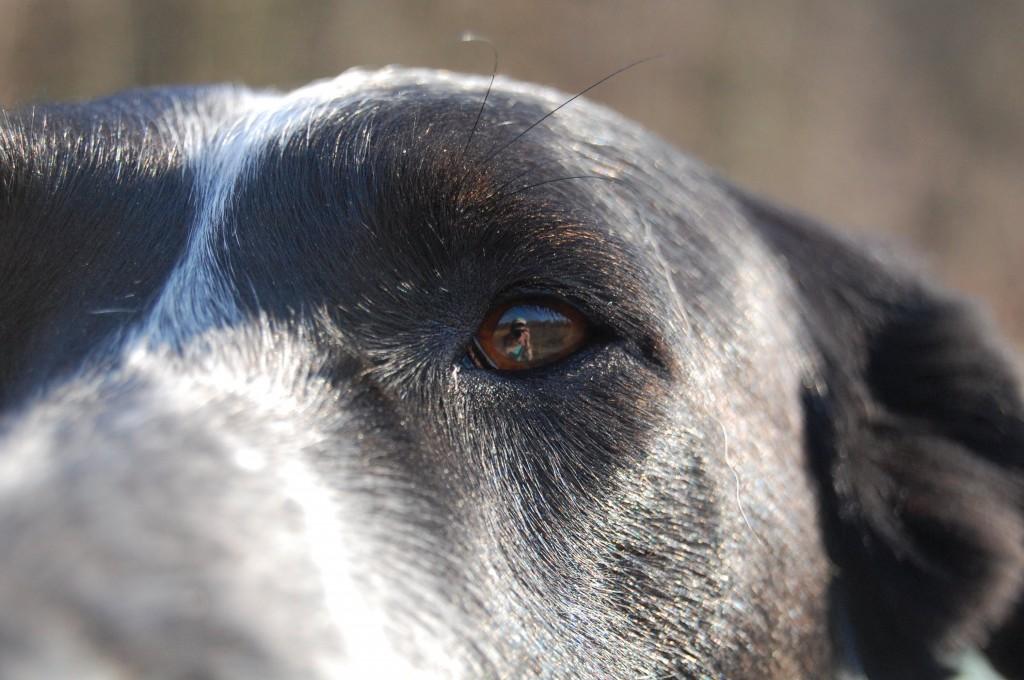 Alles im Blick auf Isarhunde.de