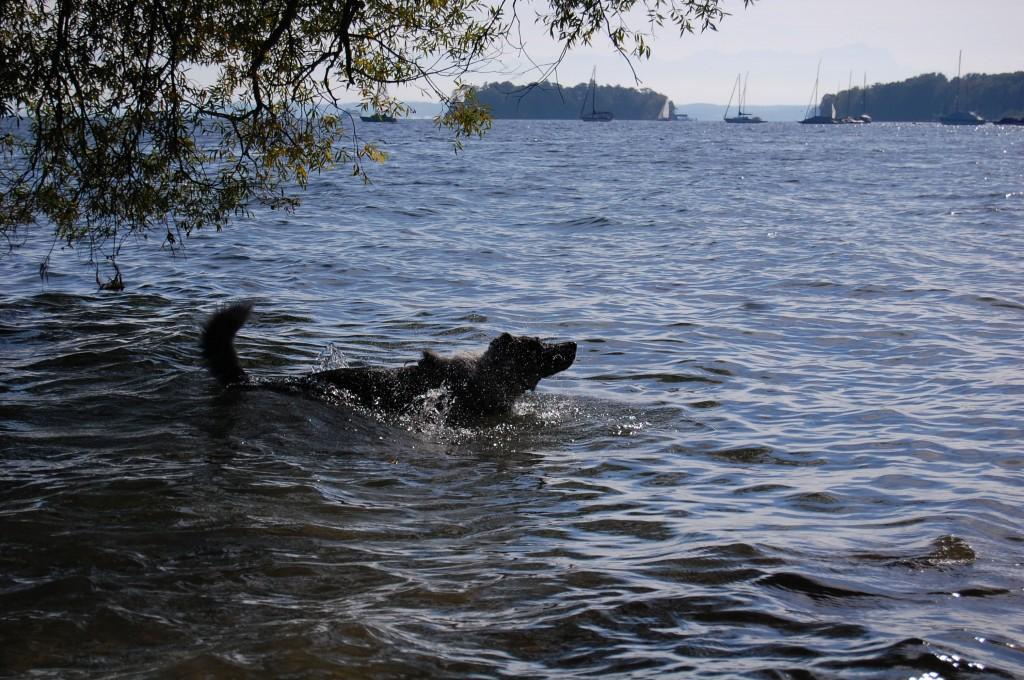 Was gibt es schöneres als ein erfrischendes Bad im Starnberger See? Wenn man Mika fragt, nicht viel...