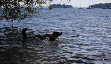 Isarhunderunde 10: Possenhofen und Wolfschlucht
