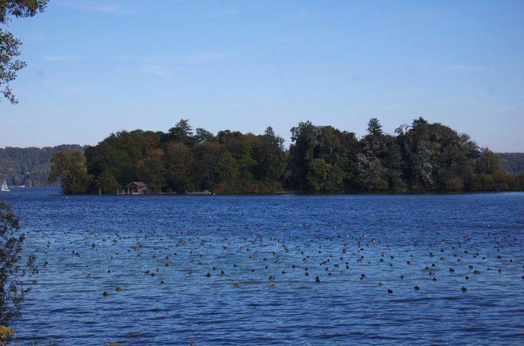 Wasservogelschwarm vor der Roseninsel