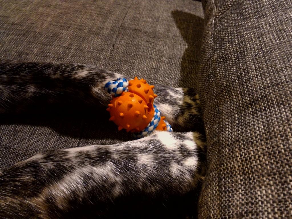 Mika testet das Spielzeug aus der Hundewunderbox