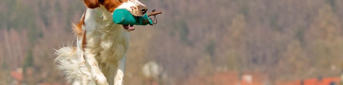 Sinnvolle Beschäftigung für Jagdhunde Teil 2 – Dummytraining