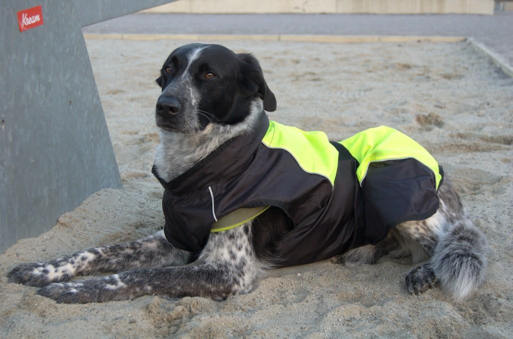 Hundemantel 2