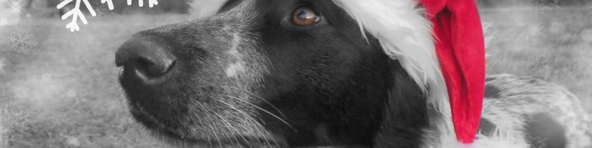 Tierblogger Adventskalender: Türchen 1
