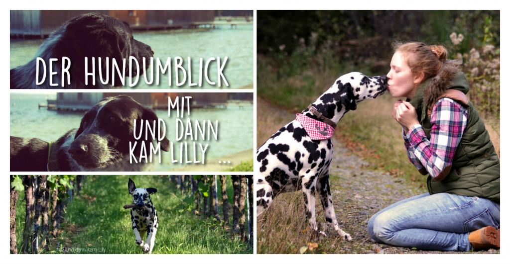 Der Hundumblick mit Und dann kam Lilly ...