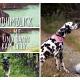 Der Hundumblick: 6 Fragen an Ricarda von Und dann kam Lilly …