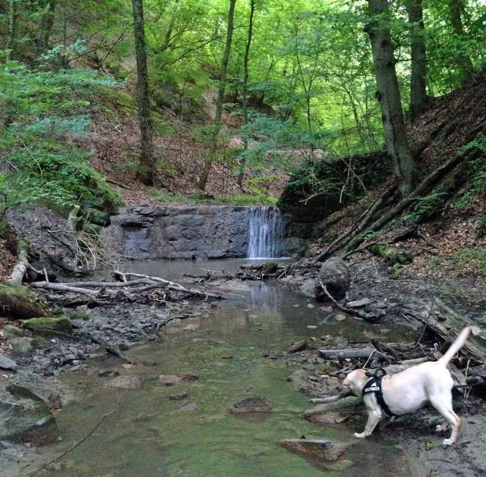 Hagenbachklamm - Hirn+Hund