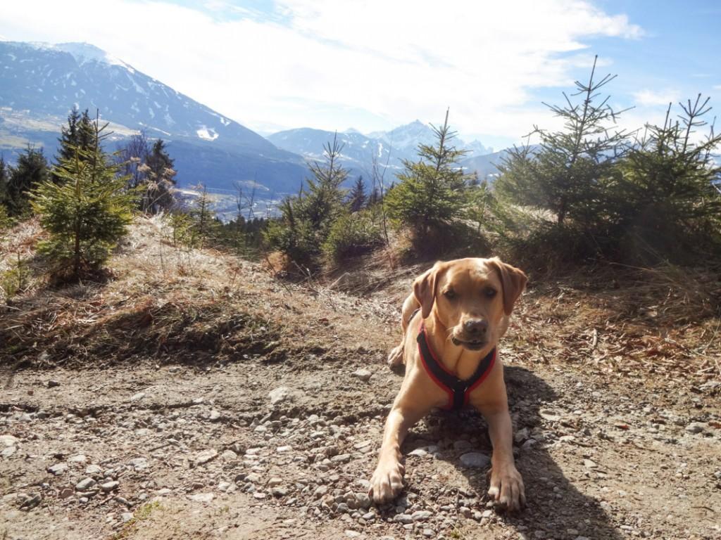 Leni, ihr Hundekumpel Cooper und Julia erwandern Tirol - viele Inspirationen für aussichtsreiche Touren dort findet man auf ihrem Blog. Foto: traveldog.at