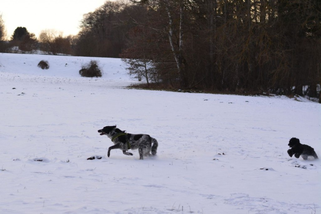 Zum Abschluss eine Sauserunde: Schön, wenn man unter den wenigen Hunden, denen wir begegnet sind, auch noch einen passenden Spielpartner findet.