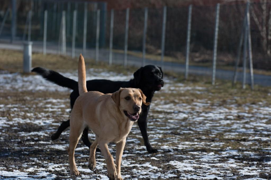 Zum Glück haben sich die beiden: Leni und Cooper. Foto: traveldog.at