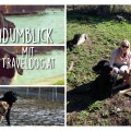 Der Hundumblick: Traveldog.at