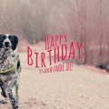 Happy Birthday: Isarhunde.de wird 6 Jahre alt!