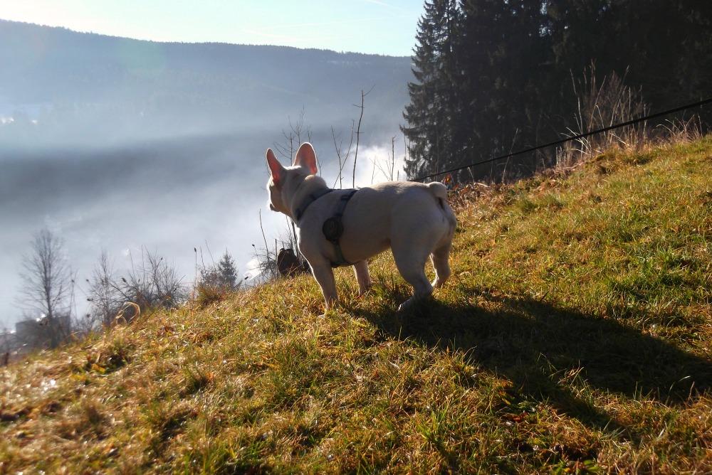 Wilma blickt über ihr Revier. Foto: Fiffibene