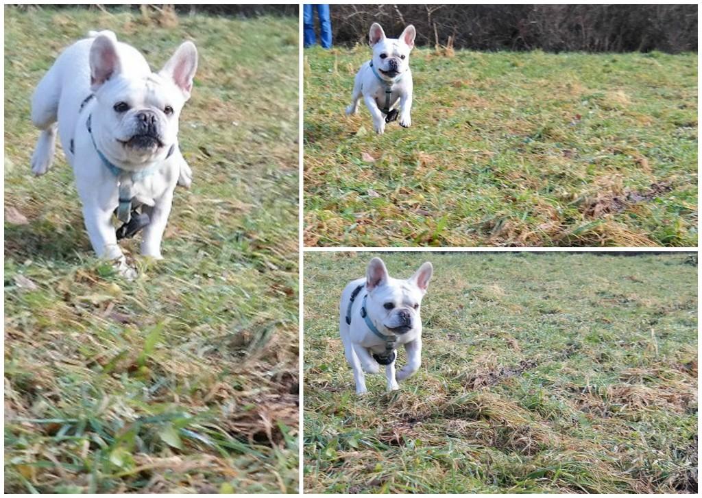 Wilma in Action. Foto: Fiffibene
