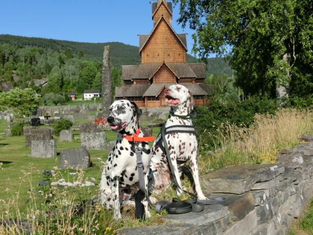Duna und Silva an der Stabkirche von Burgund. Foto: Punktesturm