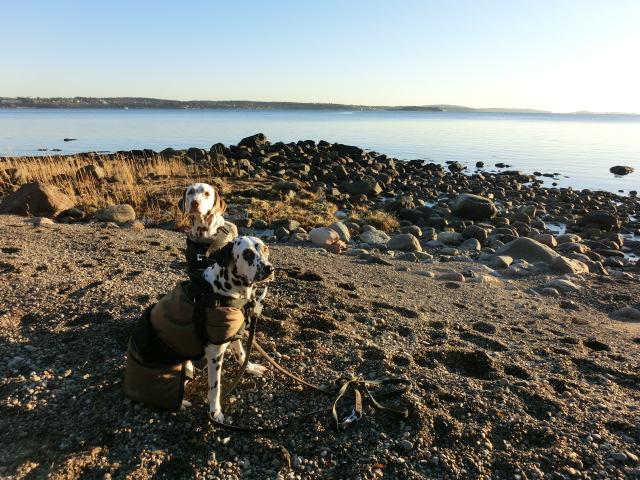 Duna und Silva am Strand auf  der Insel Jeløy. Foto: Punktesturm