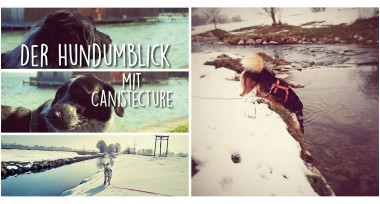 Der Hundumblick: 6 Fragen an Anna von Canistecture