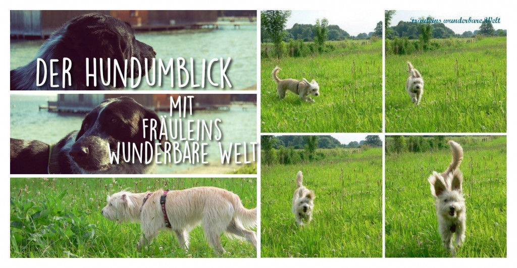 Der Hundumblick: 6 Fragen an Frauke von Fräuleins wunderbare Welt