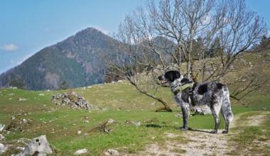 Isarhunderunde 16: Chiemseeblick an Adersberg und Schwarzenberg