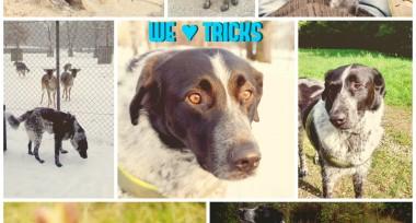 Kostenloses E-Book mit Hundetricks – und wir tricksen mit!
