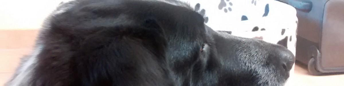 Poppeldipoppeldipositiv: Von der hohen Kunst der Positiven Psychologie im Hundetraining