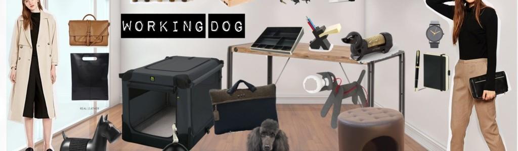 Schönes Hundeleben: Working Dog – mit Hund im Büro