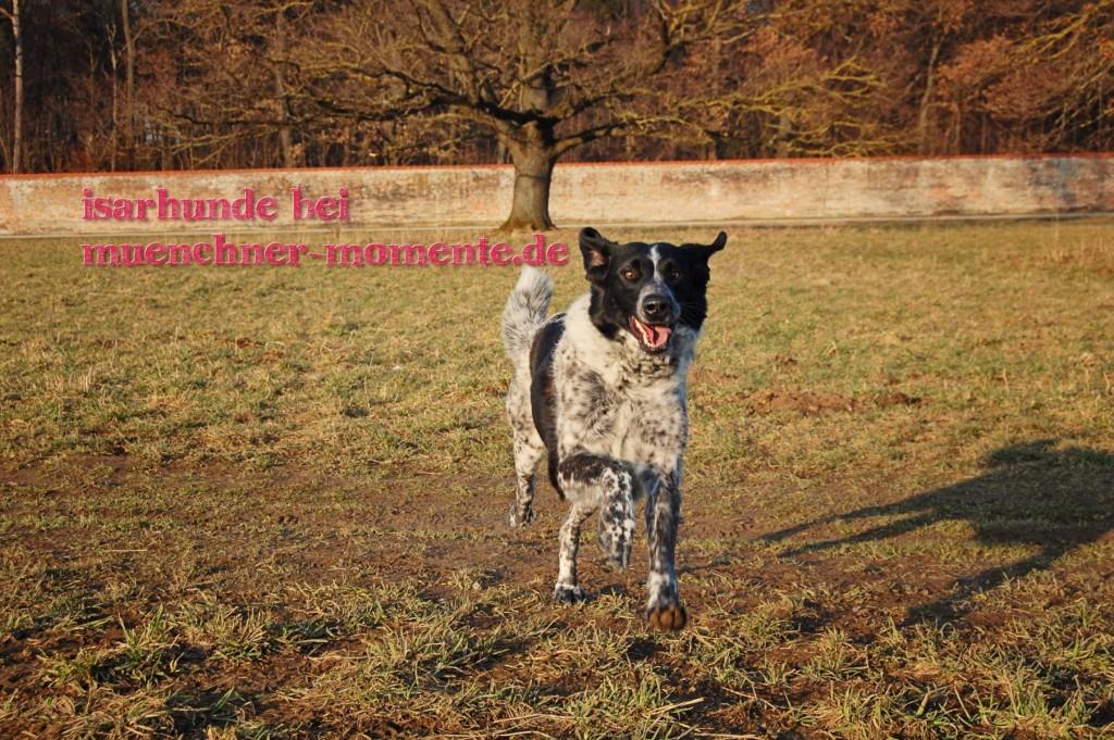 Isarhunde bei muenchner-momente.de
