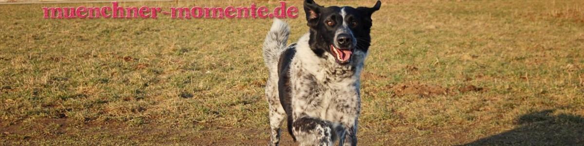Hunde in München – ein paar Fakten