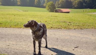 Isarhunderunde 17: Ammerrundweg