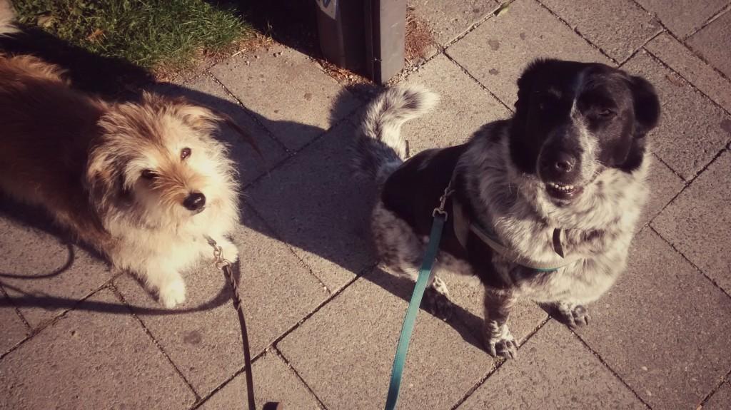 Mit Mika und Buxi unterwegs
