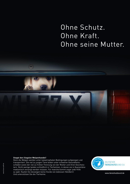 Kampagne gegen den illegalen Welpenhandel. Bild: Deutscher Tierschutzbund