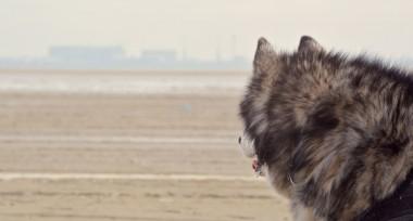 Isarhund goes Nordsee: Von Hundesprache und Dünenwandern – #texel4dogs