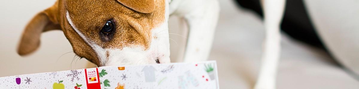 Aufgestöbert: Is that my dinner? Ein Kratz- und Schnüffel-Buch für Hunde