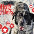 Frohe Weihnachten wünschen euch Alexandra und Mika