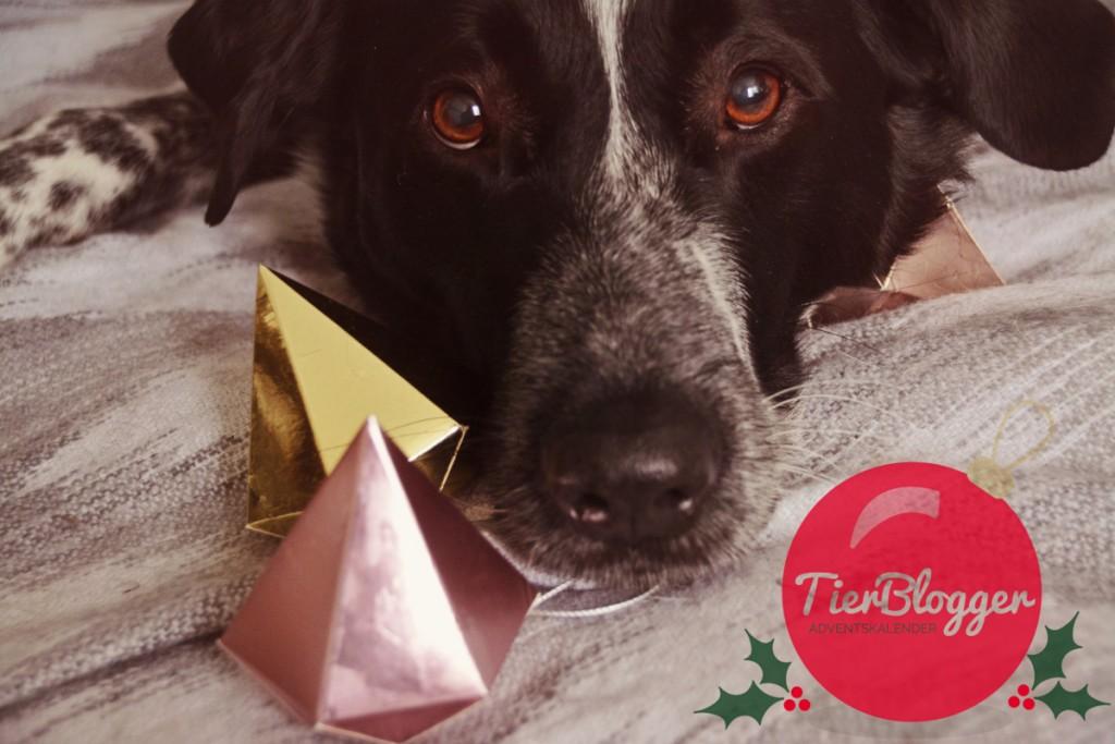TierBlogger Adventskalender Türchen 17: Wir warten aufs Christkind