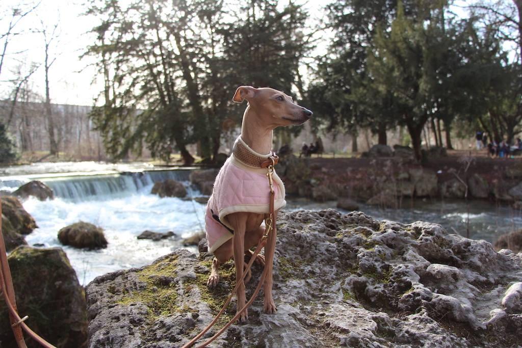 Lola mag Münchner Hunde-Hotspots, schätzt aber auch die Ruhe im Münchner Süden. Foto: miDoggy