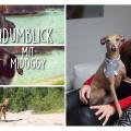 Der Hundumblick: 6 Fragen an Julia von miDoggy