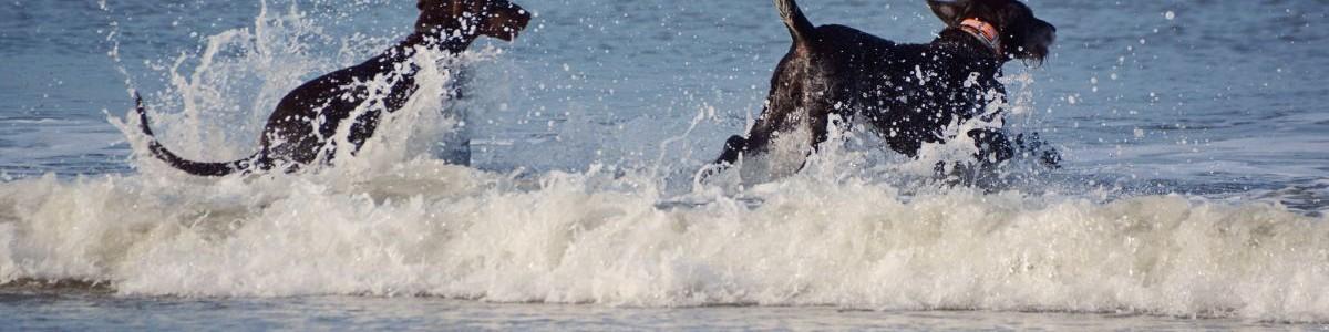 Isarhund goes Nordsee: Ein actionreicher Tag – #texel4dogs