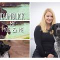 Der Hundumblick: 6 Fragen an Nicole von Moe & Me