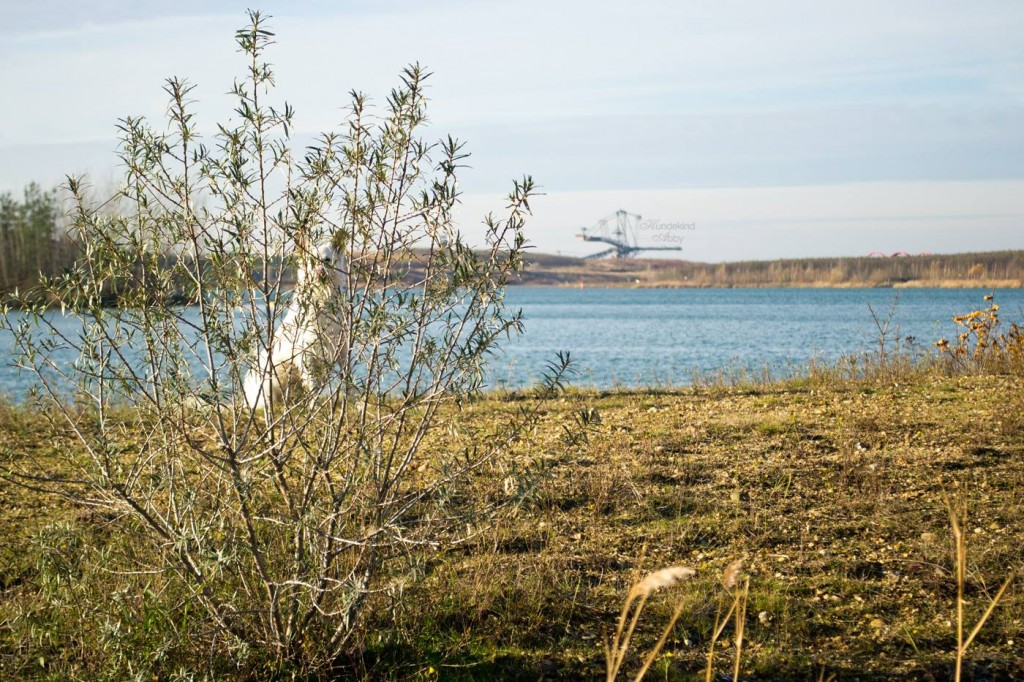 Für Hunehalter einen Besuch wert: die Leipziger Seen . Foto: Hundekind Abby