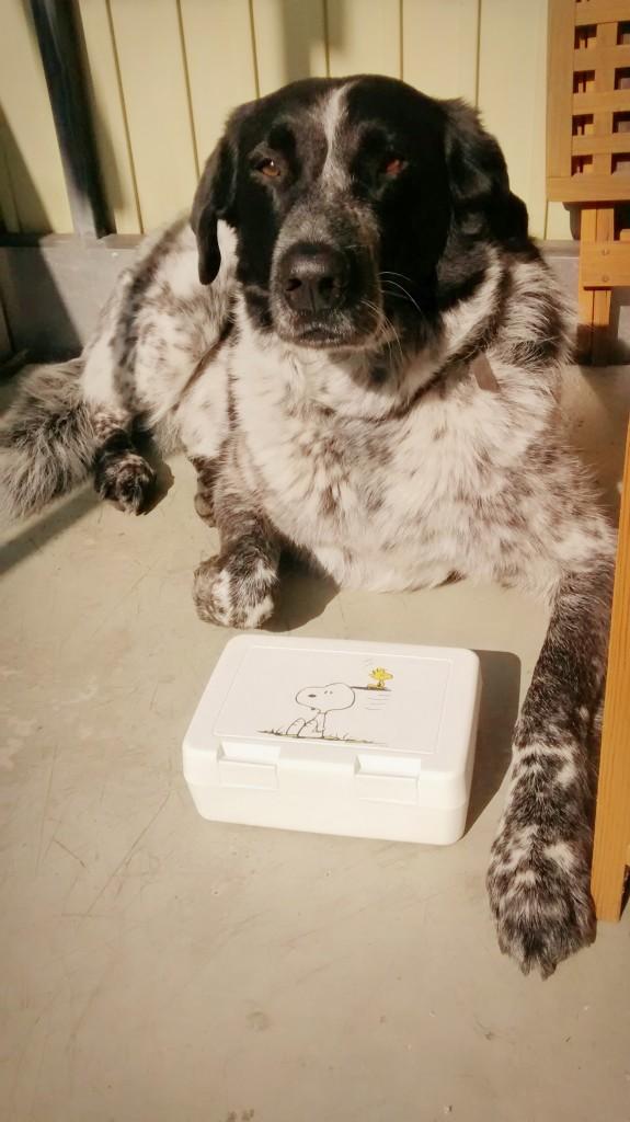 Mika und die Snoopy-Brotdose