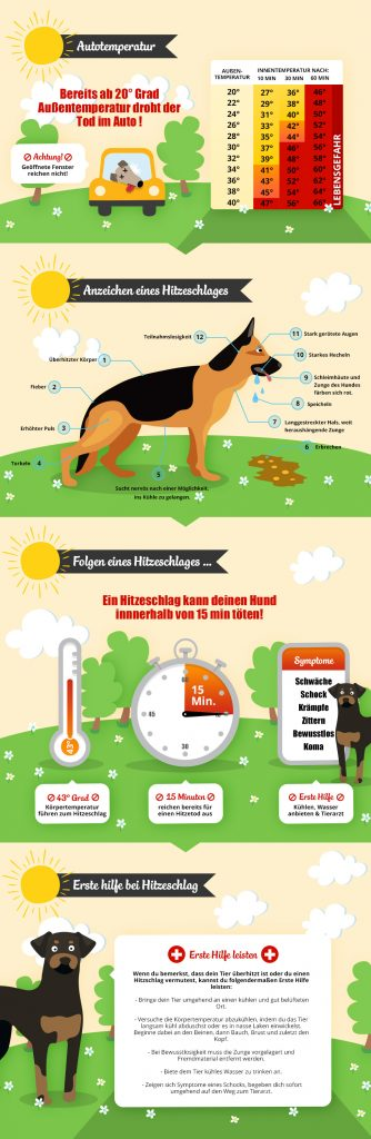 """Infografik """"Hitzefalle Auto"""" von Petfindu"""