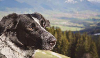 Isarhunderunde 19: Alpenpanorama auf dem Zwiesel