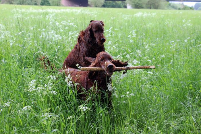 Flynn und Watson vom Hundebloghaus haben jede Menge Möglichkeiten sich auszutoben. Foto: Hundebloghaus