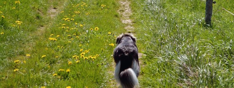 Isarhunderunde 20: Strecke machen rund ums Manthal