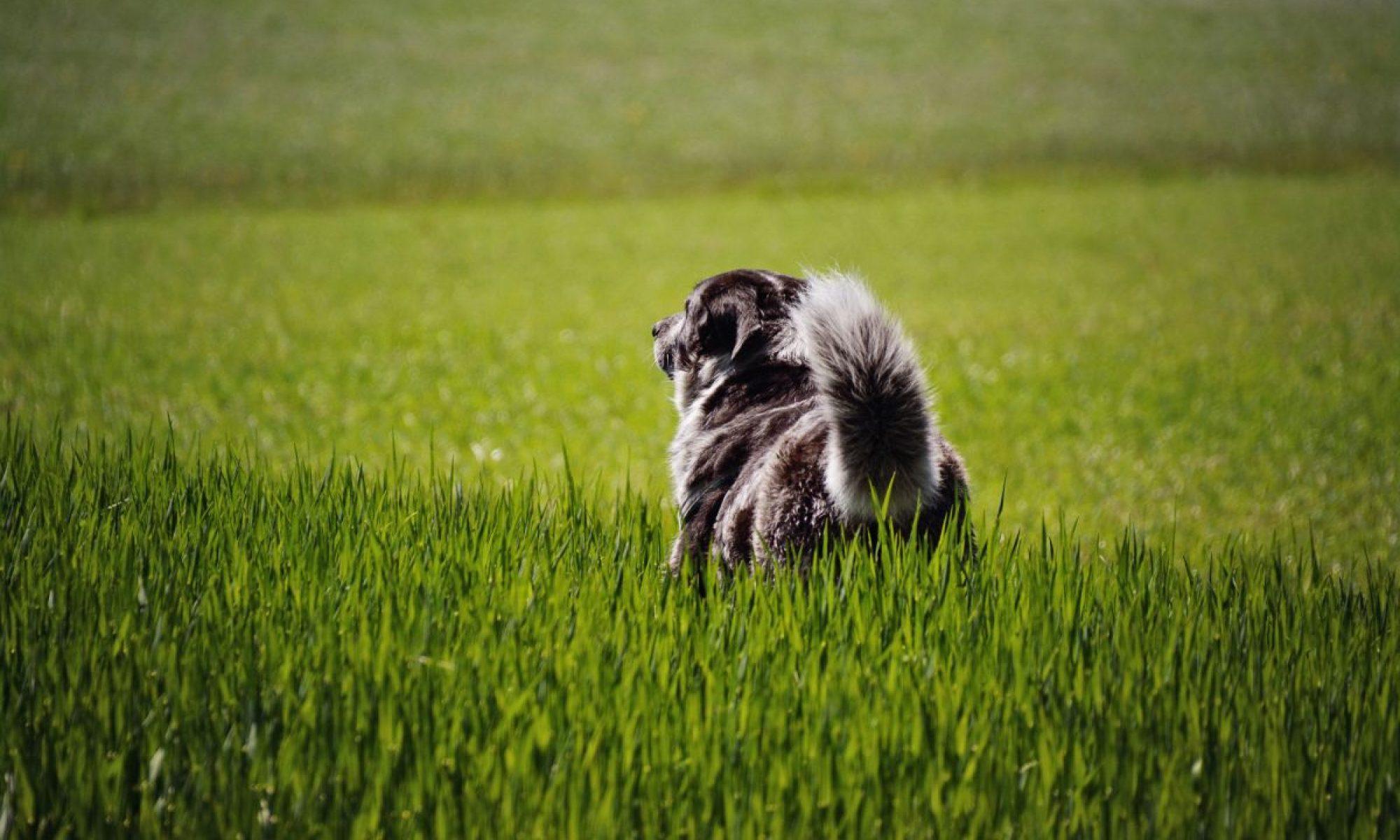 Isarhunde